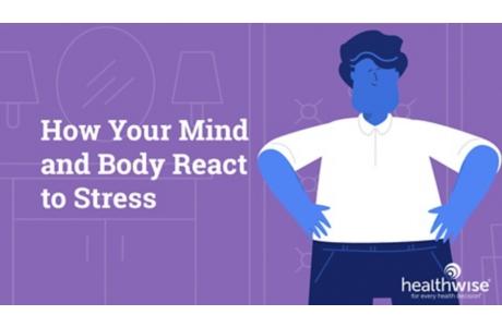 Cómo el cuerpo reacciona al estrés